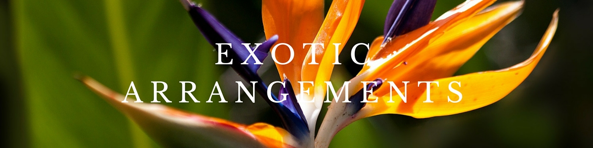 EXOTIC ARRANGEMENTS